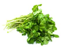 Watercress isolado no branco puro Foto de Stock