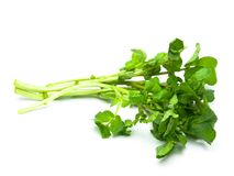 Watercress isolated on pure white Royalty Free Stock Image