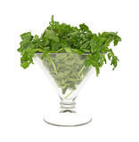 Watercress in large glass Royalty Free Stock Photography