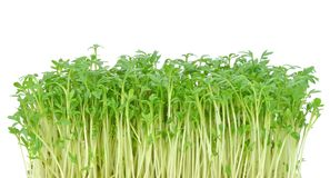 Watercress leaves Royalty Free Stock Image
