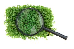 Watercress and magnify glass Royalty Free Stock Photos