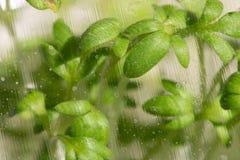 Watercress makro- 100mm fotografia stock