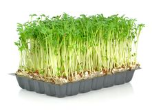 Watercress in a plastic tray Stock Photos
