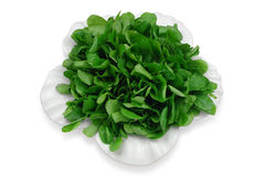 Watercress salad. Green watercress salad on a white plate Royalty Free Stock Image