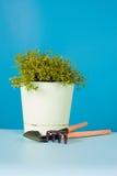 Watercress salad in a pot Stock Photos