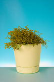 Watercress salad in a pot Royalty Free Stock Photos