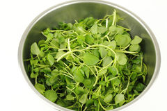 Watercress in a Stainless Steel Bowl Royalty Free Stock Photo