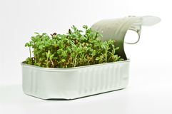 Watercress in a tin can Royalty Free Stock Photography