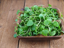 Watercress in wooden bowl Royalty Free Stock Image