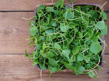 Watercress in wooden bowl Royalty Free Stock Photos