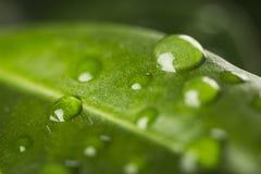Waterdaling bij groen blad royalty-vrije stock fotografie