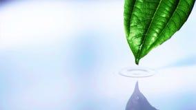 Waterdaling die van blad in waterpool vallen in langzame motie stock video