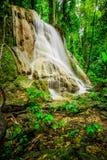 Waterdaling in diepe regenwoudwildernis die wordt gevestigd Stock Fotografie