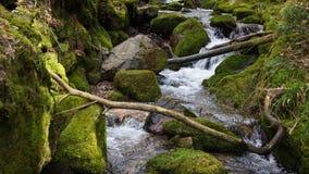 Waterdaling met het gevallen hout van de bomenzuinigheid in zwart bos stock foto