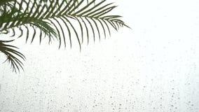Waterdaling op een blad na het regenen, de Lentebladeren en dalingen van de regen stock footage
