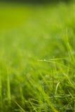 Waterdaling op groen gras Stock Afbeelding
