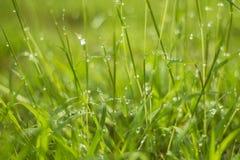 Waterdaling op groen gras Royalty-vrije Stock Afbeeldingen