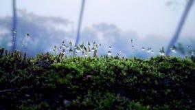 Waterdaling op groen gras Uiterst kleine wereld royalty-vrije stock afbeeldingen