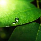 Waterdaling op groen verlof Stock Foto's