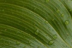 Waterdalingen stock fotografie
