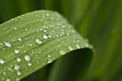 Waterdalingen. Stock Afbeelding
