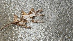 Waterdalingen die op dood eiken blad op concrete stoep druipen stock videobeelden