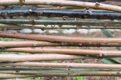 Waterdalingen die op een rieten omheining na regenval hangen royalty-vrije stock afbeeldingen