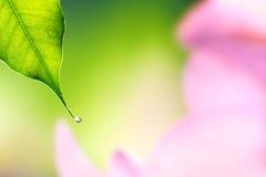 Waterdalingen die van een blad vallen Royalty-vrije Stock Foto's