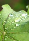 Waterdalingen op bladeren Stock Foto