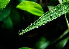 Waterdalingen op bladeren Royalty-vrije Stock Foto
