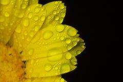 Waterdalingen op Bloemblaadjes Stock Foto's