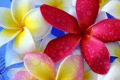 Waterdalingen op bloemen royalty-vrije stock foto's
