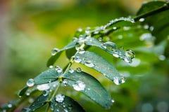 Waterdalingen op de groene boombladeren royalty-vrije stock foto