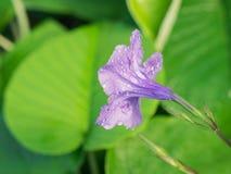 Waterdalingen op de Rug van Purpere Baby Houten Rose Ivy Flowers royalty-vrije stock afbeeldingen