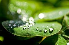Waterdalingen op een blad Stock Fotografie