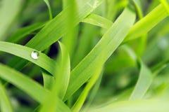 Waterdalingen op een blad stock afbeeldingen