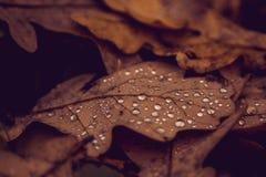 Waterdalingen op een blad royalty-vrije stock fotografie