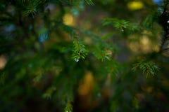 Waterdalingen op een boom Royalty-vrije Stock Foto's