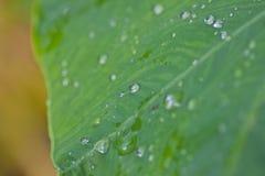 Waterdalingen op een groen blad Stock Afbeeldingen