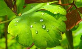Waterdalingen op een groen blad Royalty-vrije Stock Afbeeldingen