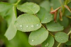 Waterdalingen op een groen blad stock foto's