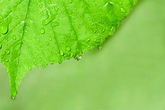 Waterdalingen op een groene bladmacro Stock Foto's