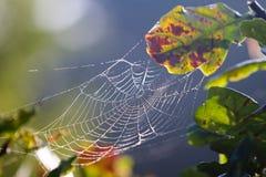 Waterdalingen op een spiderweb Royalty-vrije Stock Foto