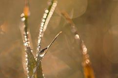 Waterdalingen op gras Royalty-vrije Stock Foto's