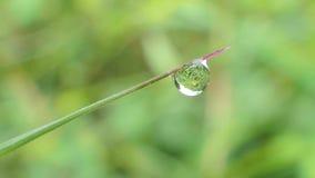 Waterdalingen op gras De Achtergronden van de aard stock videobeelden
