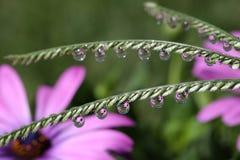 Waterdalingen op Grasaartje, macro Royalty-vrije Stock Afbeeldingen