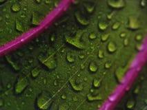 Waterdalingen op groen blad - close-up Stock Afbeeldingen