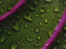 Waterdalingen op groen blad - close-up Stock Foto's