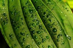 Waterdalingen op het blad Royalty-vrije Stock Foto