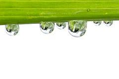Waterdalingen op vers groen blad Stock Foto